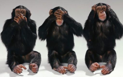 obezyana-shimpanze-troe-rot