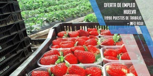 oferta-de-empleo-en-la-recogida-fresa-huelva
